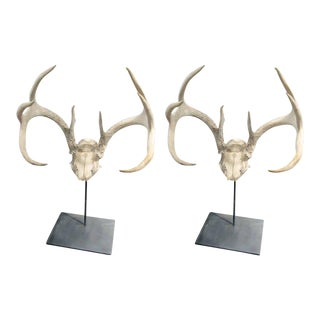 One Pair of Sculptural Antler Mounts on Custom Iron Stand For Sale