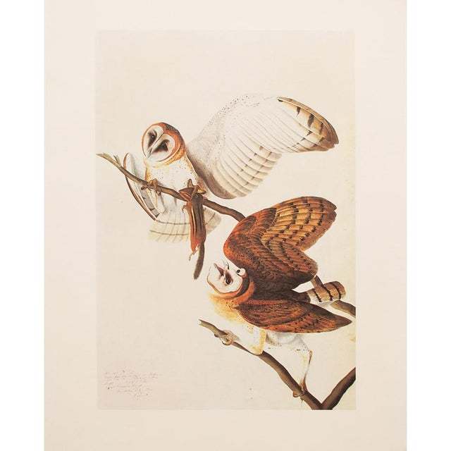 Orange 1966 John James Audubon Barn Owls Lithograph For Sale - Image 8 of 9
