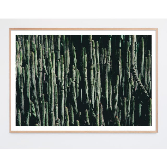 Large Cactus Photograph in Cool Tones Unframed For Sale - Image 4 of 4