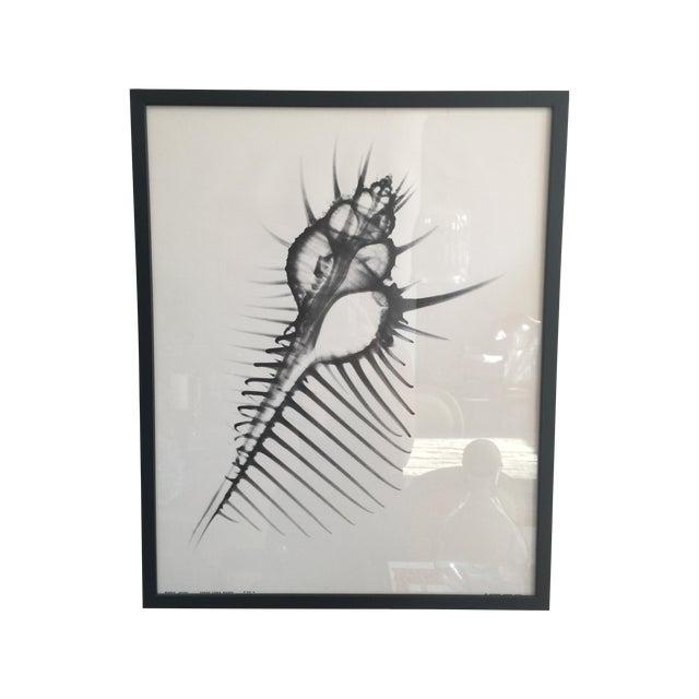 George Green X Ray Print - Image 1 of 5
