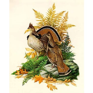"Roger Tory Peterson ""Ruffed Grouse"" Original Signed Limited Edition Print For Sale"