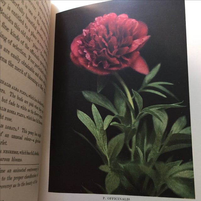 """"""" The Book of the Peony by Harding"""" 1st Edition - Image 5 of 9"""