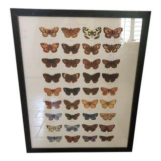 "Multi Butterflies Papilio Plate 2 Print - 24x30"" For Sale"