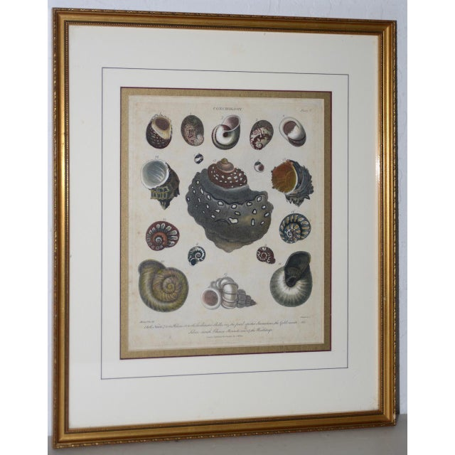 "Pair of Early 19th Century ""Conchology"" Color Etchings C.1802 For Sale - Image 4 of 7"