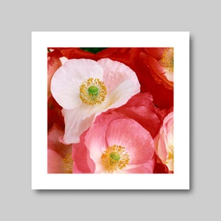 """Photographic Print, """"Poppies"""" by Mike Lorrig Preview"""