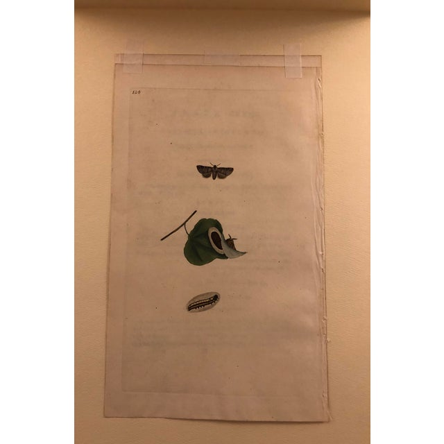 Antique 19th Century Entomology Hand Colored Print For Sale - Image 4 of 4