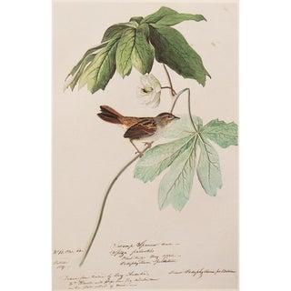 1966 Audubon Large Swamp Sparrow Lithograph For Sale
