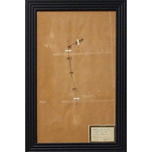 French Framed Botanicals - Set of 8 For Sale - Image 10 of 10