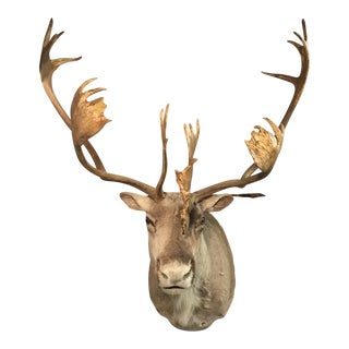 Caribou Head Wall Mount For Sale