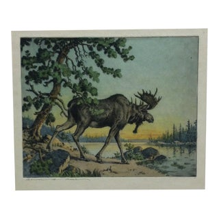 """Mounted Limited Edition Original Etching """"Bull Moose"""" by Benson B. Moore For Sale"""