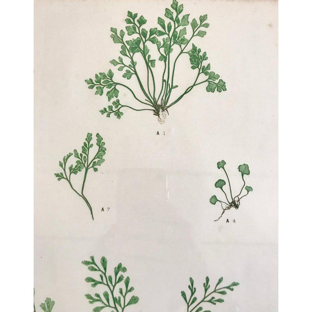Arts & Crafts 19th Century Bradbury & Evans Nature Printed Fern Print For Sale - Image 3 of 5