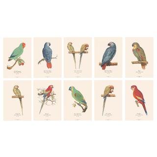 XL 1590s Contemporary Prints of Anselmus Boëtius De Boodt Parrots - Set of 10 For Sale