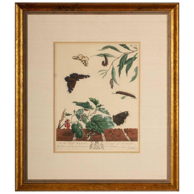 Paper Plate Xii, Camberwell Beauty, Large Magpie Moth, Moses Harris, 1785 For Sale - Image 7 of 7