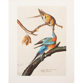 """Valentine's Day Special! 1960s Cottage Style """"Passenger Pigeon"""" Lithograph by Audubon For Sale"""