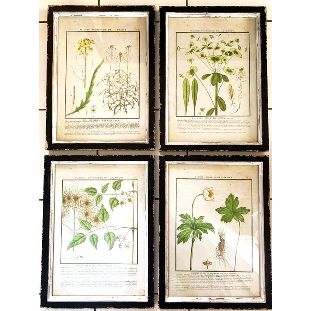 Vintage French Botanical Prints Reproductions Framed, Set of Four. The prints are framed in distressed painted frames...