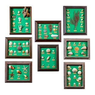 Collection Vintage French Sea Shells Set Eight Circa 1960 For Sale
