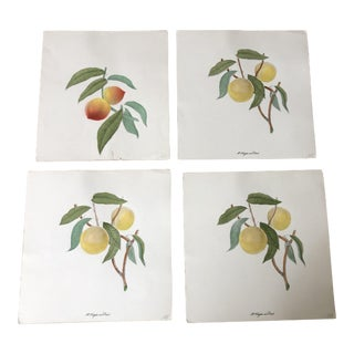 Vintage Mid-Century Fruit Prints - Set of 4 For Sale