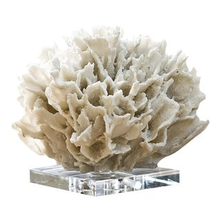 Ribbon Coral in White For Sale
