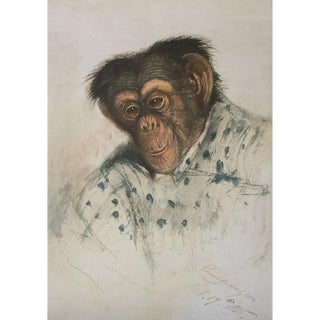 1835 Chimpanzee by Edward Lear, Reproduction Print For Sale