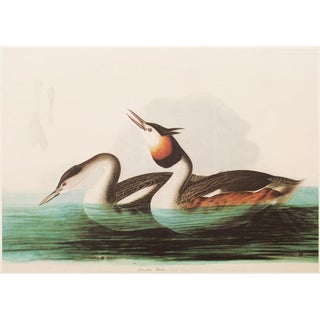 "1966 Cottage Style ""Crested Grebe"" Lithograph Print by Audubon For Sale"