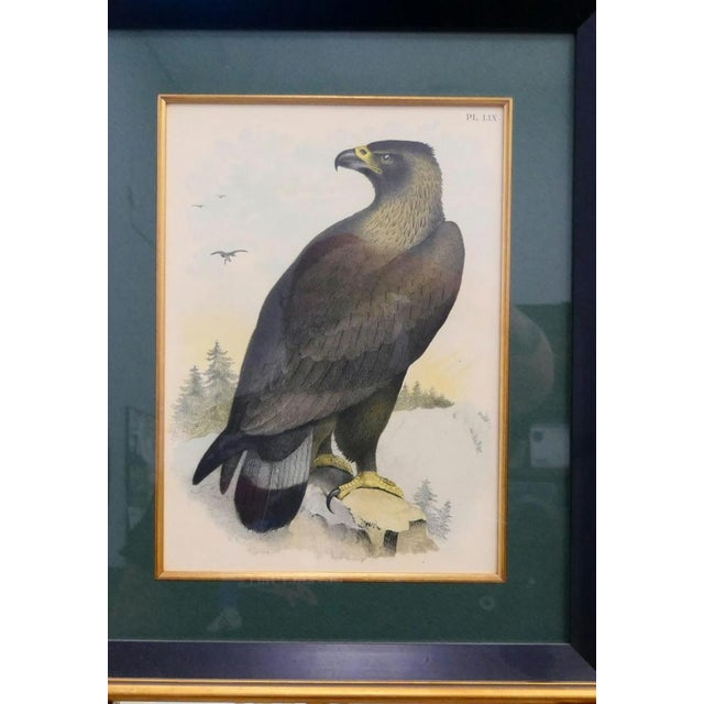 Here is an excellent, handcolored etching of an eagle, most likely a bookplate. The eagle is beautifully drawn and...
