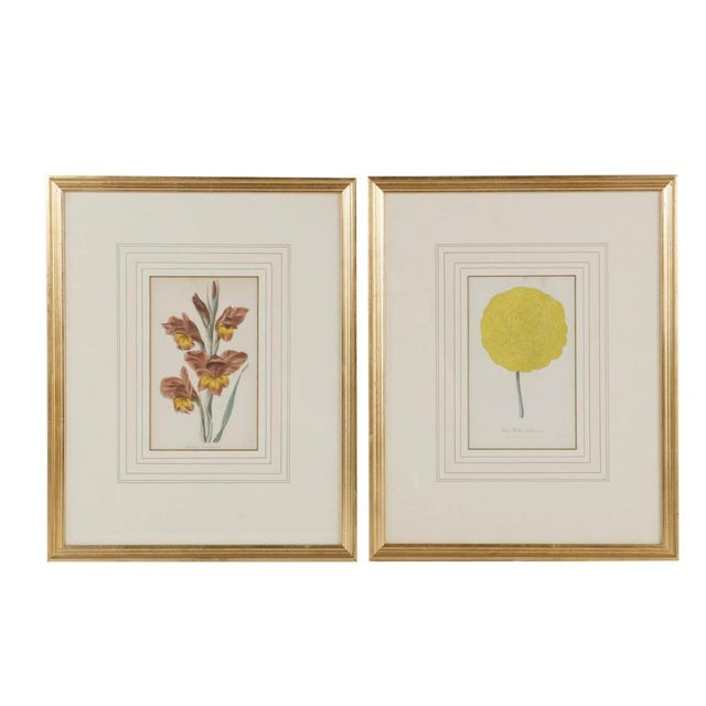 Set of 12 Antique Hand Colored Collection Of Botanical Print Engravings Beautifully Framed & Matted.