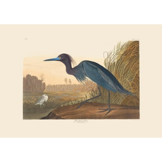 John James Audubon Print, Blue Crane or Heron For Sale