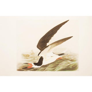 "1966 Audubon, Cottage Style ""Black Skimmer"" Lithograph For Sale"