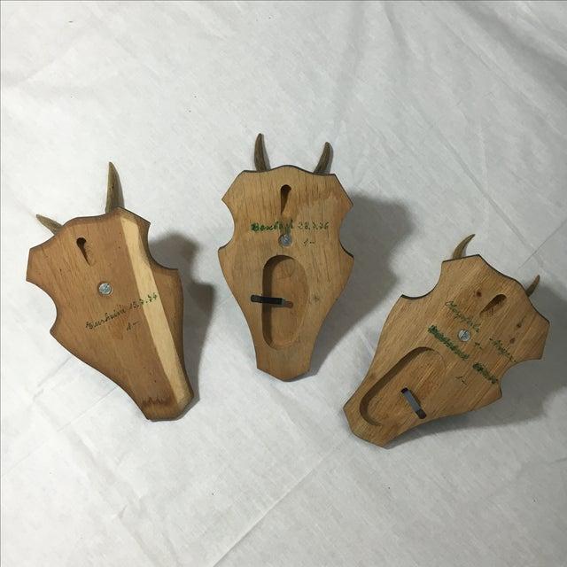 European Roe Deer Trophy Mount - Set of 3 - Image 6 of 6