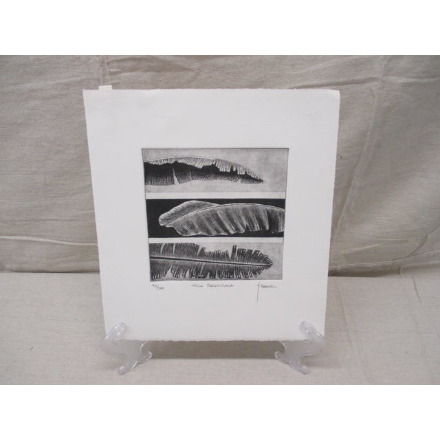 Late 20th Century Vintage Lithograph in Black & White of Leaves Titled: Musa Paradisiaca For Sale - Image 5 of 5