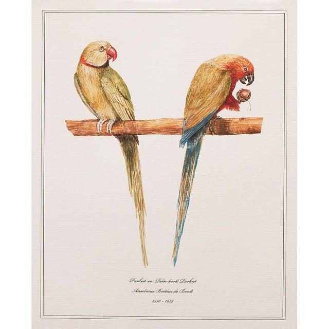 American Classical 1590s Anselmus Boëtius De Boodt, Parrot Print Set of 9 For Sale - Image 3 of 13
