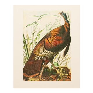 1966 Vintage John James Audubon Wild Turkey Print For Sale