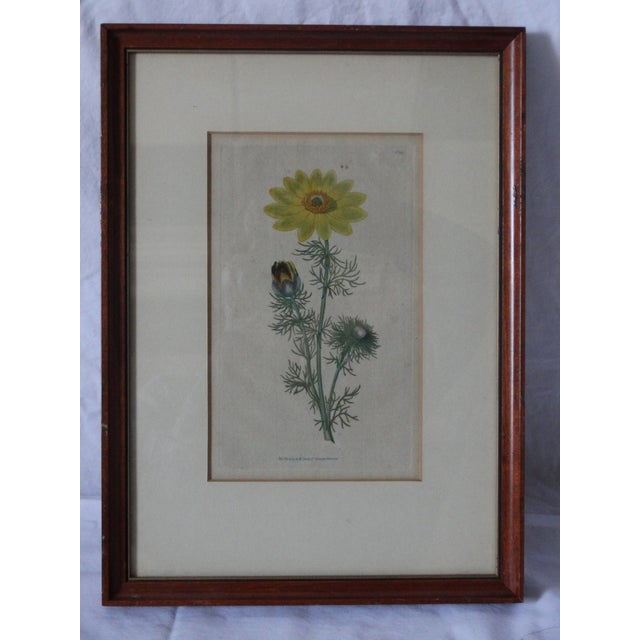 Boho Chic English Curtic Yellow Sunflower Botanical Print For Sale - Image 3 of 3