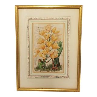 C. 1846 France Botanical Severyn Stem of Lilies