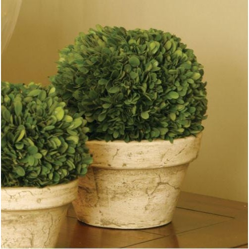 The Boxwood Ball In Pot 9 x 9 x 10 Real English boxwoods, preserved and painstakingly assembled by our masterful artists....