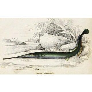 Sir William Jardine Green Fish Engraving Preview