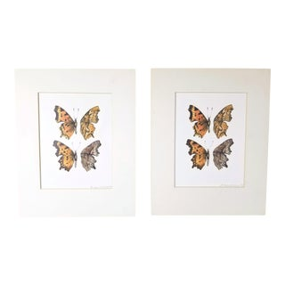 Late 20th Century Butterfly Entomology Lithograph Prints - A Pair For Sale