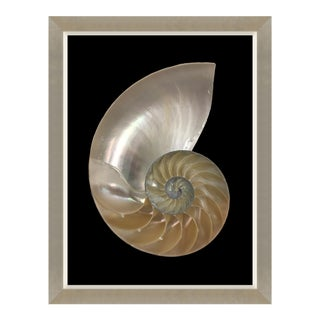 Spira Mirabilis V Print Framed Kenneth Ludwig Chicago For Sale