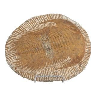 Moroccan Cambropallas Trilobite Fossil For Sale