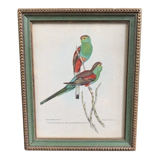 """Late 20th Century Manor House """"Gould Birds"""" Framed Parrot Print For Sale"""