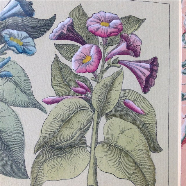 Vintage John Richard Botanical Print - Image 7 of 11