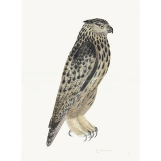 Eagle Owl Plate 08 by Olof Rudbeck (Cfa-Wd) For Sale