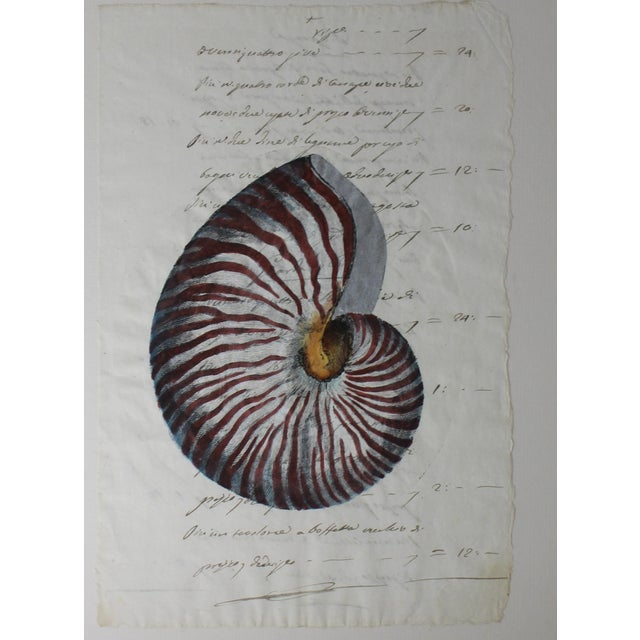 This hand painted nautilus shell on a piece of parchment paper (that dates to the early 19th century) will make a definite...