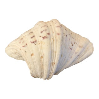 Large Natural Clam Shell