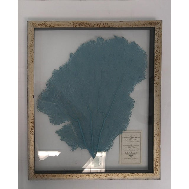 Blue Haze Sea Fan in Antiqued Silver Frame For Sale - Image 10 of 10