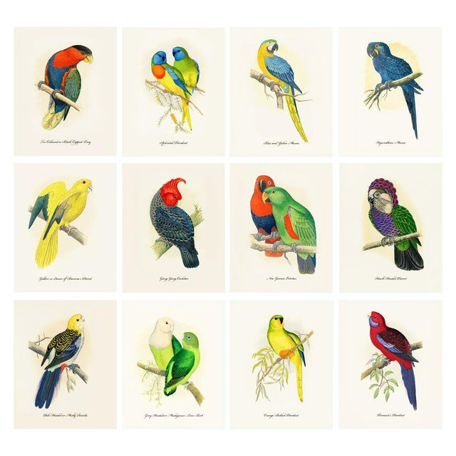 1884 Alexander Francis Lydon, Parrot Reproduction Set of 12, N1 For Sale