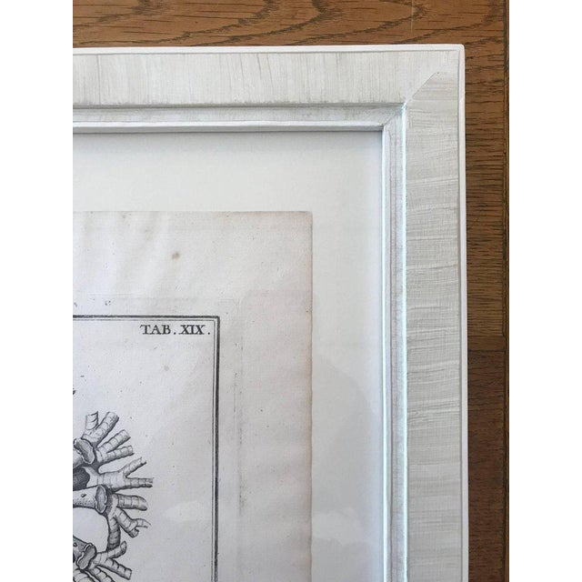 French 18th Century Rare French Engraving of Sea Star For Sale - Image 3 of 8