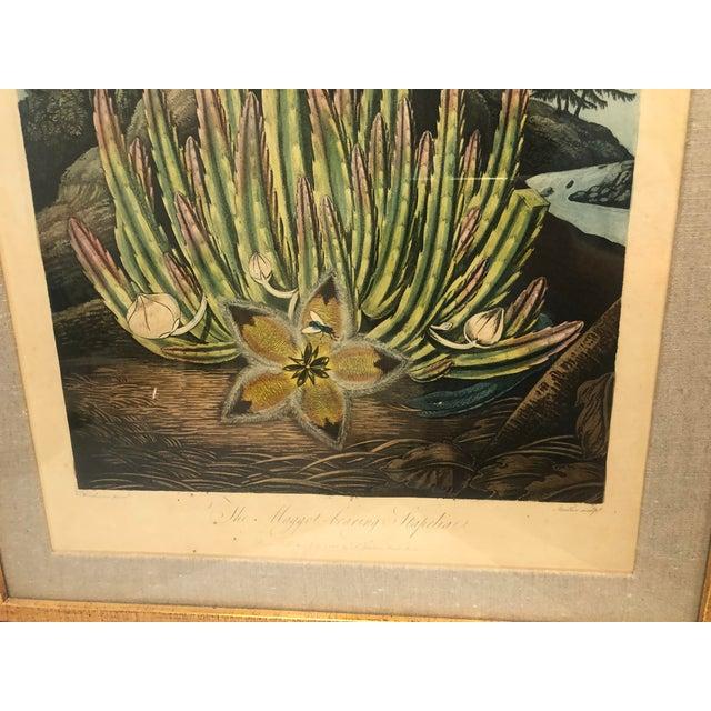 19th Century Boho Chic Succulent Botanic Print For Sale - Image 9 of 12