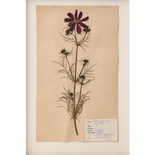 White Ten Vintage Swedish Herbaria For Sale - Image 8 of 13