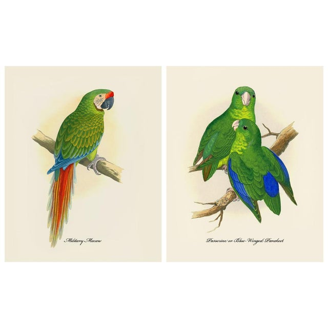 1884 Alexander Francis Lydon, Parrot Reproduction - Set of 12, N2 For Sale In Dallas - Image 6 of 13